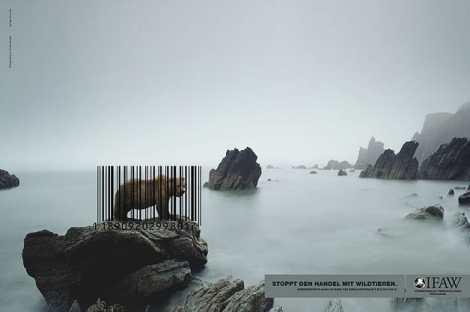 anuncio-animal-30